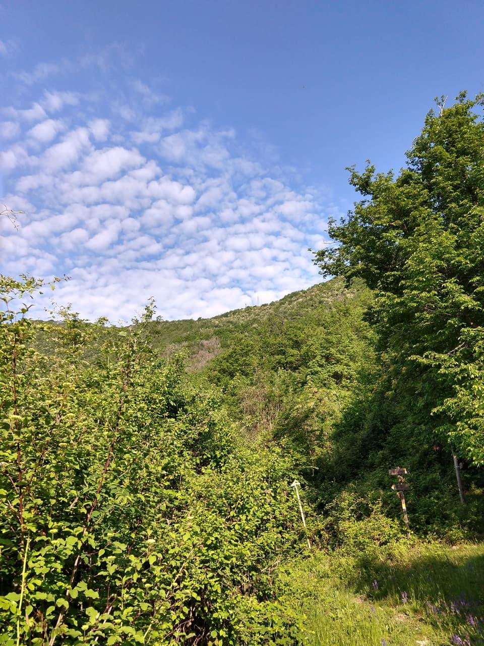 La discesa verso Cogozzo attraversa un fitto bosco ed è resa sicura dalla presenza di alcune corde metalliche