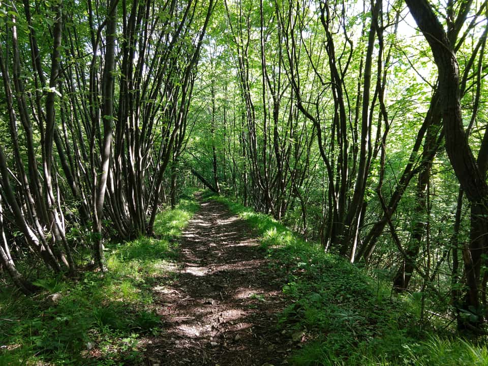 L'escursione si sviluppa quasi totalmente all'interno di un rilassante bosco