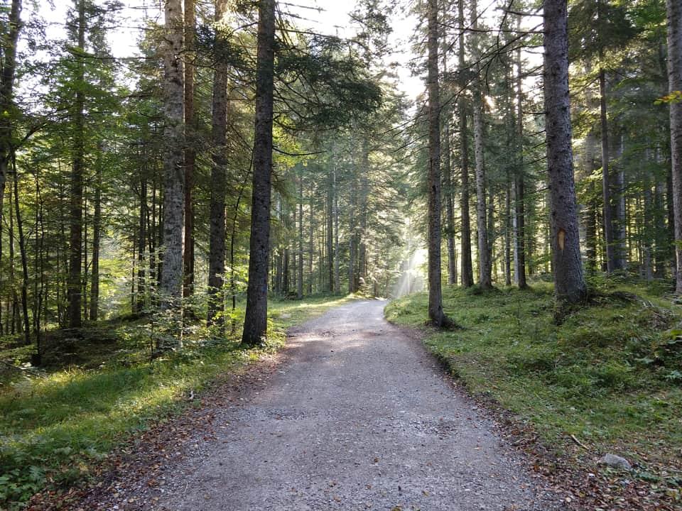 Il primo tratto del percorso si sviluppa su una comoda carrareccia nel bosco