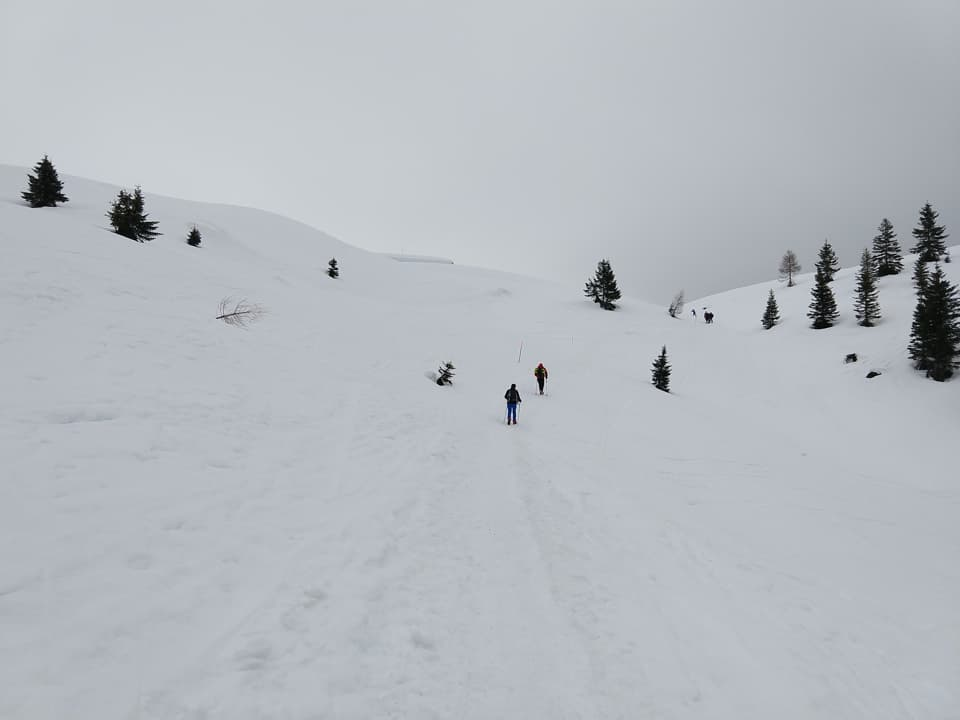 Dopo un'ora di cammino si raggiunge la Malga Fevri, da qui in poi proseguiremo con le racchette da neve