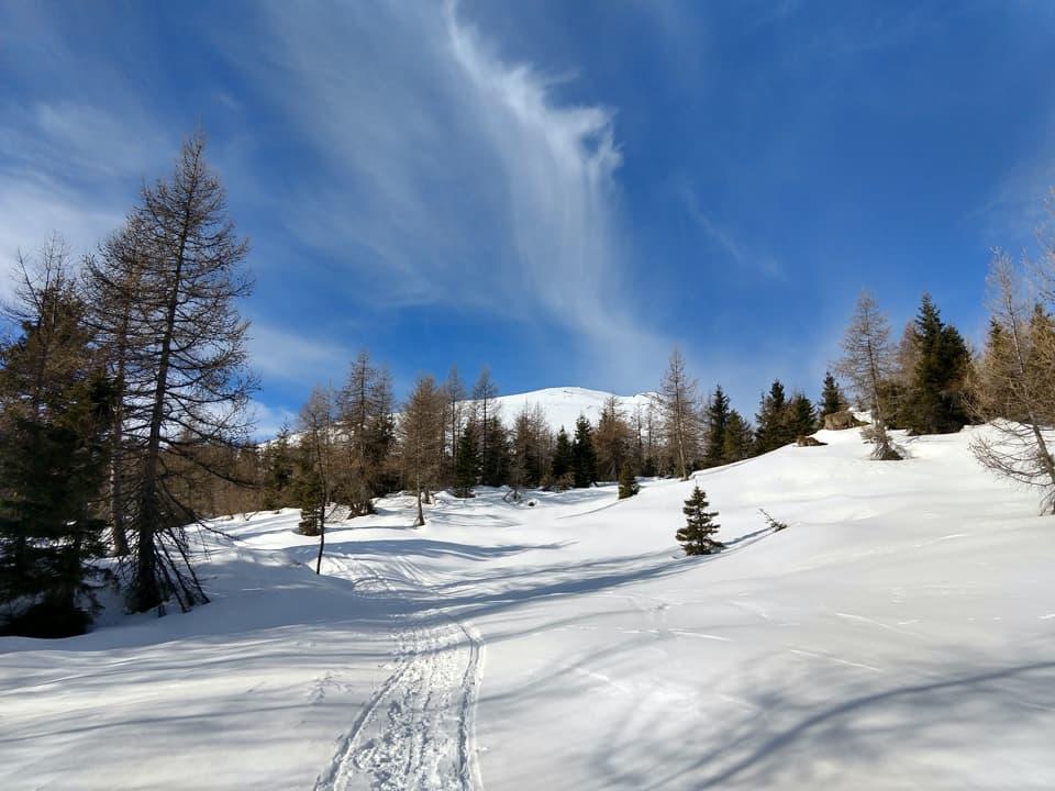 Buona parte del percorso si svolge attraverso il bosco, uno scenario che la neve rende ancora più suggestivo